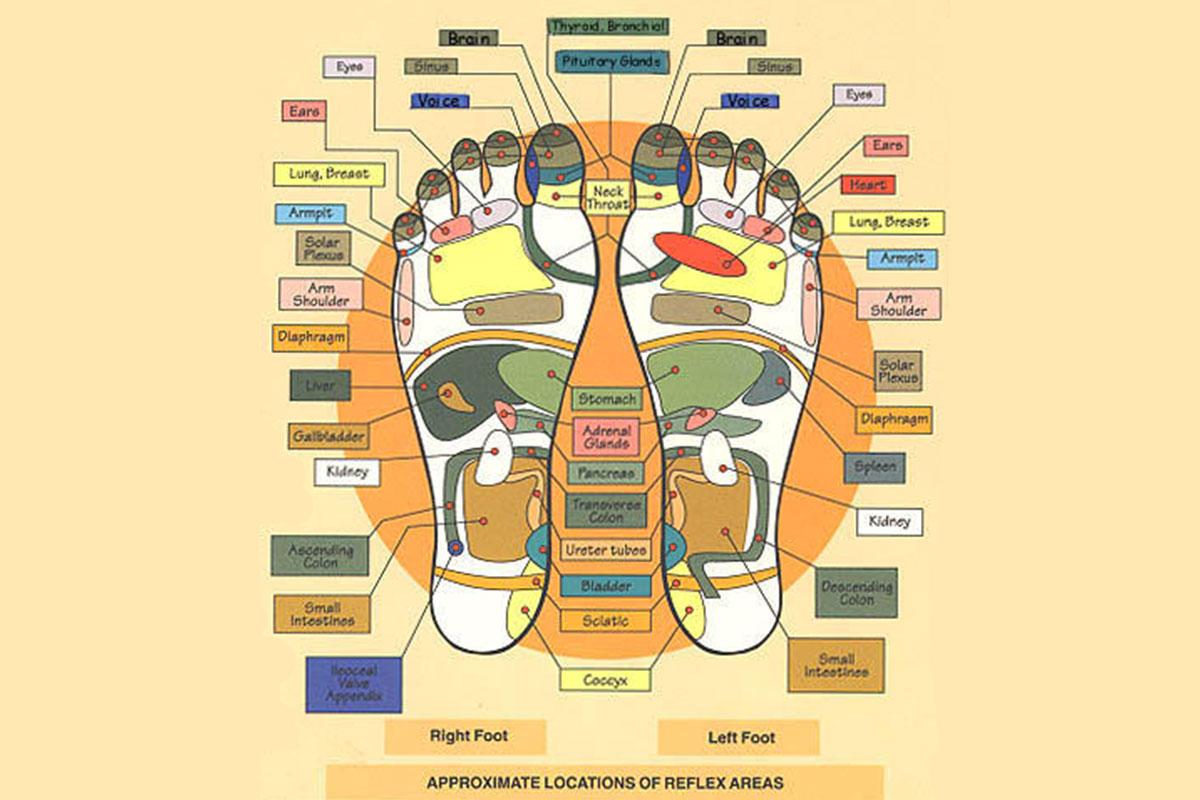 Mappa Riflessologia Plantare
