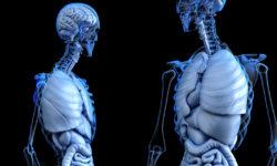 Percorso polmone e intestino crasso